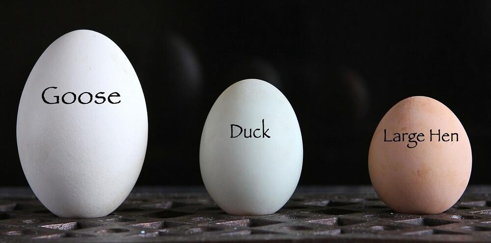 Bà bầu ăn trứng ngỗng có tác dụng gì đối với thai nhi?